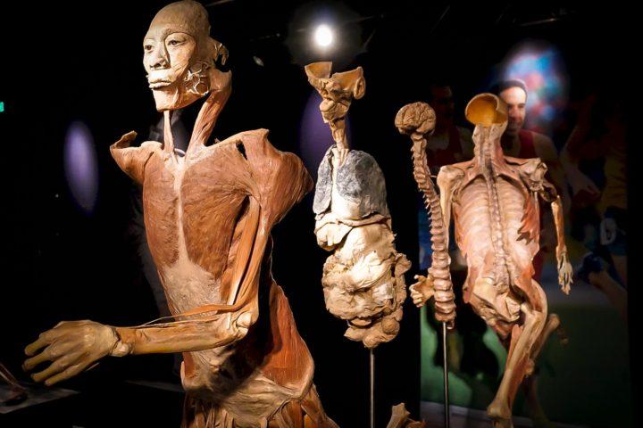 Guido Reni District - Real Bodies